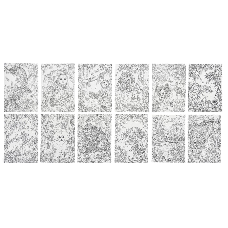 книга раскраска антистресс лес Cpa240 вв1716