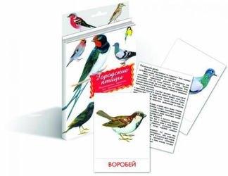 Фото Набор карточек Городские птицы