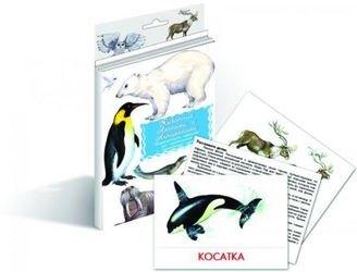 Фото Набор карточек Животные Арктики и Антарктиды