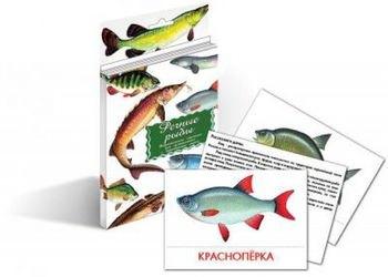 Фото Набор карточек Речные рыбы