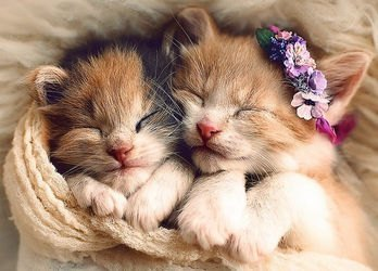Фото Пазл Спящие котята 500 элементов (37271)