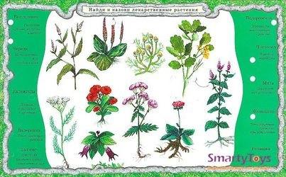 Электровикторина Детям о растениях фотография 4