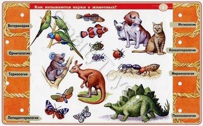 Электровикторина Детям о животных фотография 2