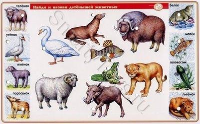 Электровикторина Детям о животных фотография 4