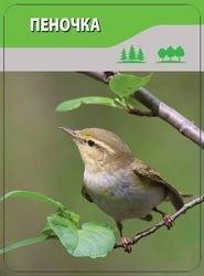 Детям о птицах (50 карточек) фотография 4