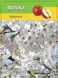 Овощи и фрукты (50 карточек) фотография 2