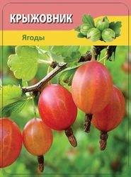 Овощи и фрукты (50 карточек) фотография 4