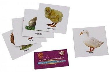 """Фото Карточки для развития ребенка """"Домашние птицы. Мамы и дети"""""""