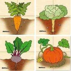 Фото Развивающая игра Картинки разрезные деревянные Овощи (Д-601)